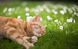 cat-resting-in-the-grass-297101